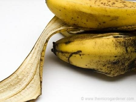 Banana peels can be soaked, dried or used whole as an organic plant fertiliser. | The Micro Gardener