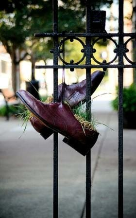 Business shoe planter. Photo: Erin Smith
