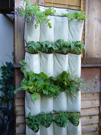 Grow your own vertical vegetables in a hanging shoe caddy from Instructables.