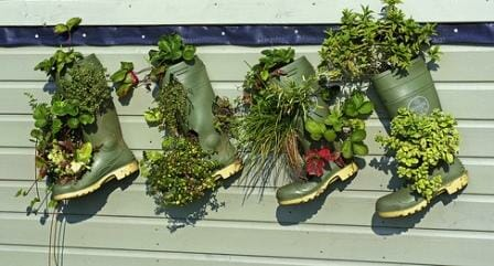 Wonderful wellington boot planters filled to the brim with edible herbs and strawberries. Photo: Mark Pether-Longman