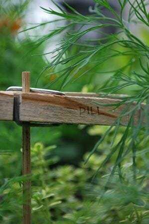 Dill peg plant marker. Photo: Stacey Shitani
