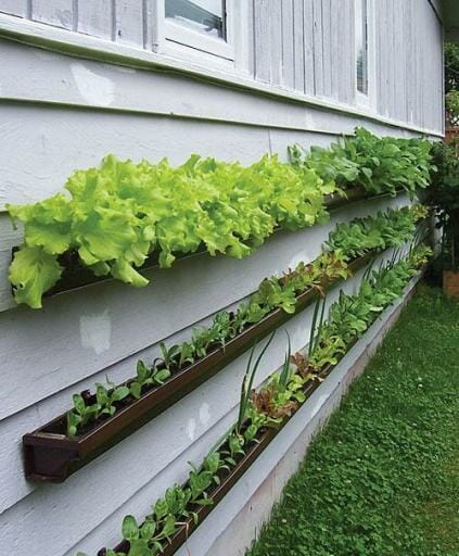 Edible gutter gardens - this simple idea is easily replicated on any sunny wall.