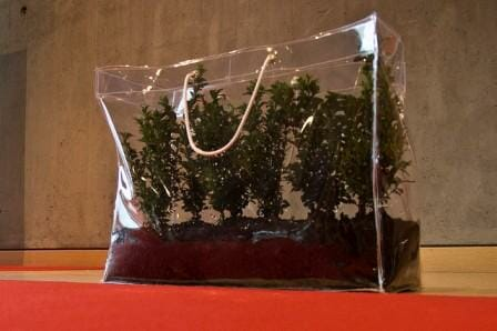 This clear carry bag makes a perfect terrarium and is a super gift idea. Photo: Anne Helmond