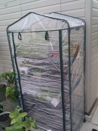 Plastic greenhouses are economical options for small spaces and less than ideal weather conditions.  You just fold them up when you need to move! Photo: Anselor