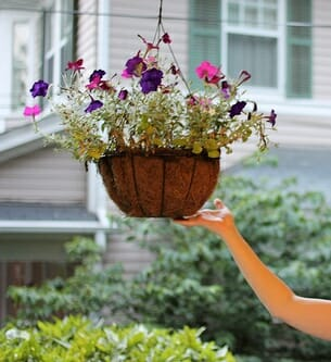 Remove hanging baskets from a hook if you need to relocate to another position around the house or balcony depending on seasonal sun. Photo: John Borwick
