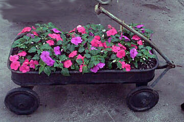 With an easy to pull handle, any cart or wagon is perfect for a mobile garden.