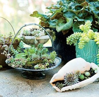 This mini collection of succulents planted in a shell and colour co-ordindated baskets doesn't take up much space and they are lightweight to move. Photo: John Granen, Kathleen Brenzel