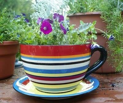 A simple container like this cute little teacup and saucer planter is perfect for small spaces.
