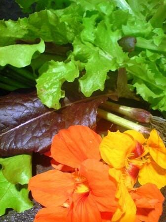 Nasturtium blossoms add a burst of colour to any salad