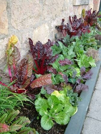 Edible colour - gorgeous greens and herbs including lettuce, tatsoi and spinach.  | The Micro Gardener