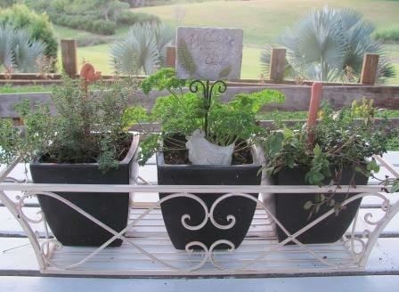 Lemon thyme, parsley, common thyme & oregano in black pots | Photo: The Micro Gardener