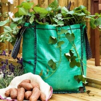 Grow bag with a harvest of sweet potatoes | The Micro Gardener