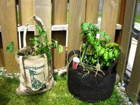 In the bag - strawberries on the left; basil, tomatoes and herbs on the right.  | The Micro Gardener
