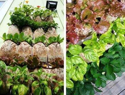 Shoe pocket planter L - view from below & R - edibles from above  | The Micro Gardener