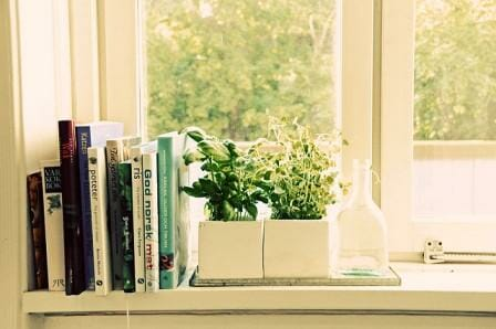 Indoor herbs are such easy micro gardens to grow | The Micro Gardener