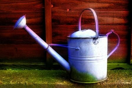 Feed your soil workers regularly using a watering can or hose pack.