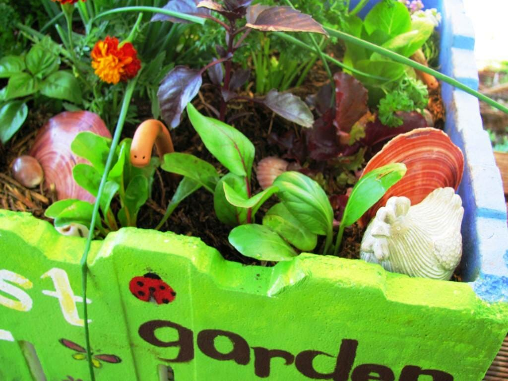Instant veggie garden in a box - use a variety of flavours, colour and texture!