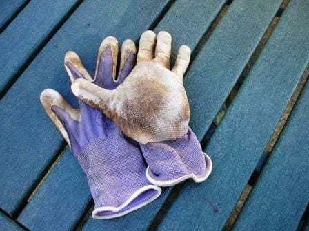 Garden gloves on the table ready for potting up