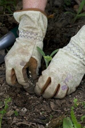 Be gentle when handling delicate seedlings. Hold by the leaves.