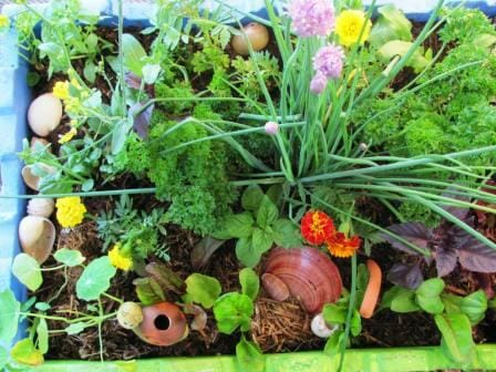 Kids edible salad, herb & flower box