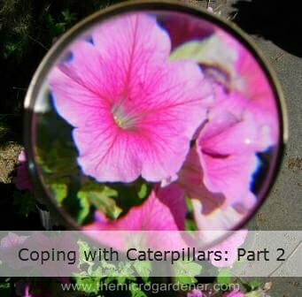 Use a magnifying glass to get up close and personal to see what's happening in your patch.