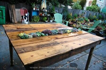 DIY Succulent Pallet Table | The Micro Gardener