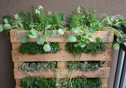Pallet garden by Fern at Life on the Balcony. www.themicrogardener.com 