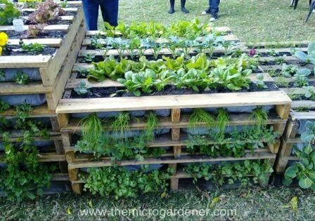 Pallet vertical gardens can be stacked and staggered at different heights depending on your space. | The Micro Gardener www.themicrogardener.com