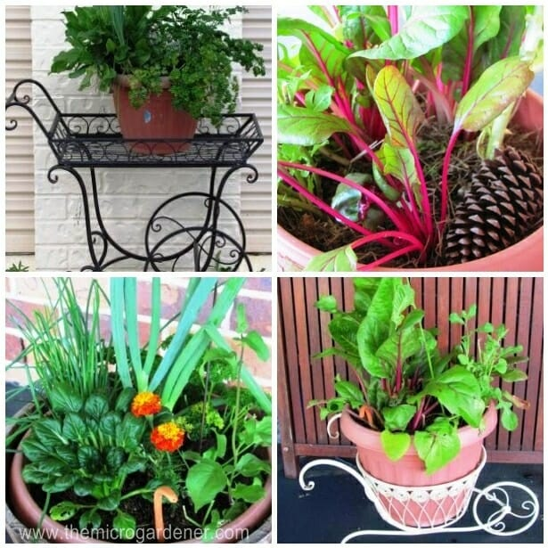 Some of my edible container gardens