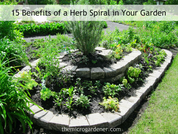 The Herb Spiral design is easily accessible from all sides: to plant, water, fertilise and harvest. This large long herb spiral has a dry microclimate at the top and a moist zone at the bottom. | The Micro Gardener