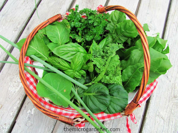 Feel good about reducing your carbon footprint while maximising the nutritional value of the food you grow. Freshly picked salad herbs and greens=maximum nutrients. | The Micro Gardener