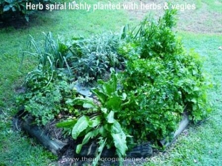 Lushly planted mature herb spiral | The Micro Gardener