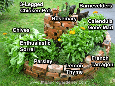 A herb spiral with a variety of herbs suited to different positions - dry & sunny at the top and moist & wet at the bottom.