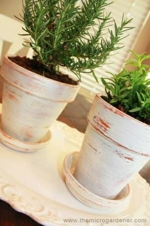 Distressed terracotta pots with herbs | The Micro Gardener