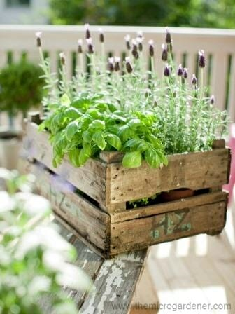 Herbs & lavender in a box | The Micro Gardener