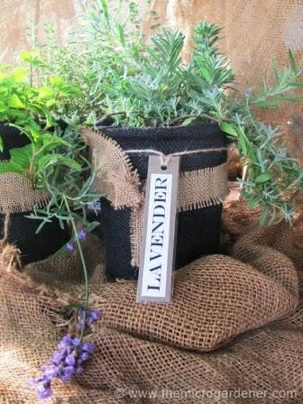 Black hessian wrapped herb pot with contrasting bow & string label. | The Micro Gardener