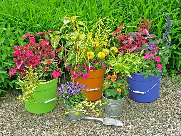 Bucket container garden | www.themicrogardener.com