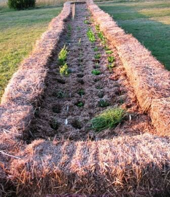 Hay bale raised garden bed