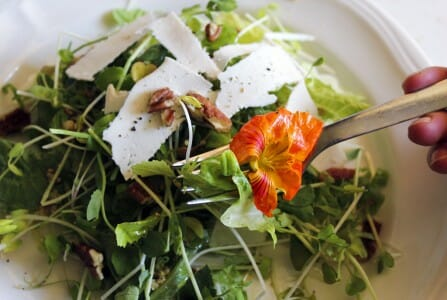 Microgreens Salad with Garlic Mustard Vinaigrette Recipe | The Micro Gardener