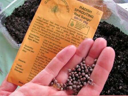 Certified organic radish sprouting seeds | The Micro Gardener