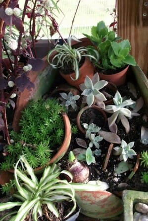 Broken pot garden with succulents | The Micro Gardener