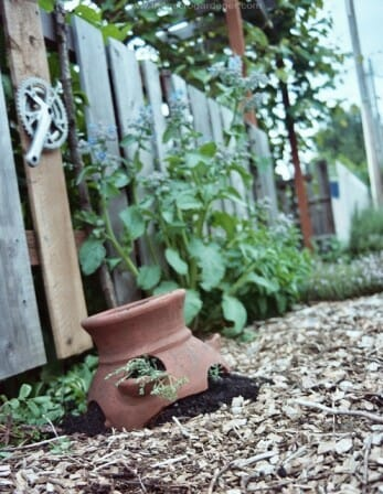 Broken strawberry planter | The Micro Gardener
