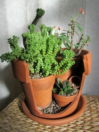 Upcycled broken pot garden | The Micro Gardener