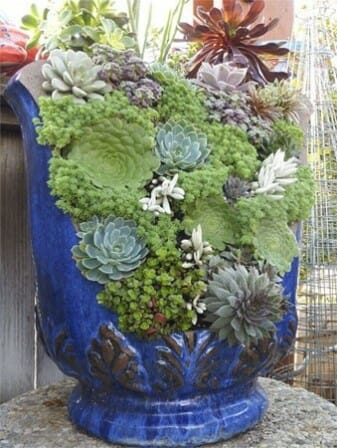Sensational succulents in a broken pot | The Micro Gardener