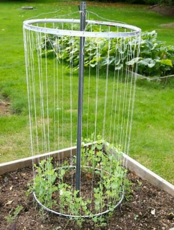 Repurposed bike rim trellis - a low cost vertical garden solution | The Micro Gardener