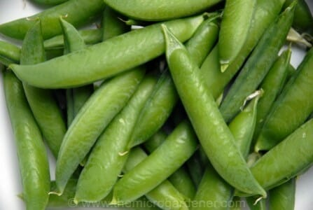Snap peas can be eaten fresh, cooked or frozen | The Micro Gardener