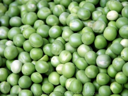 Fresh peas can be snap frozen after blanching to retain nutrients and flavour. | The Micro Gardener