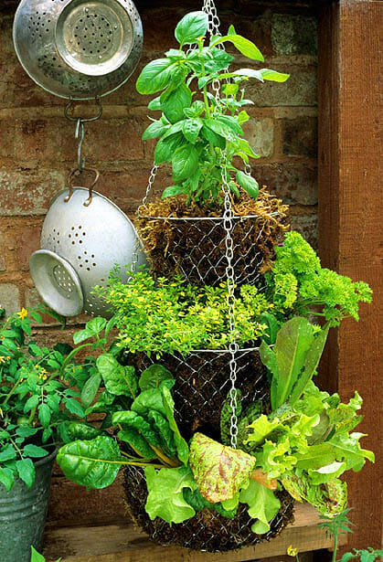 Tiered hanging baskets are a practical solution to access sunlight & vertical growing space.