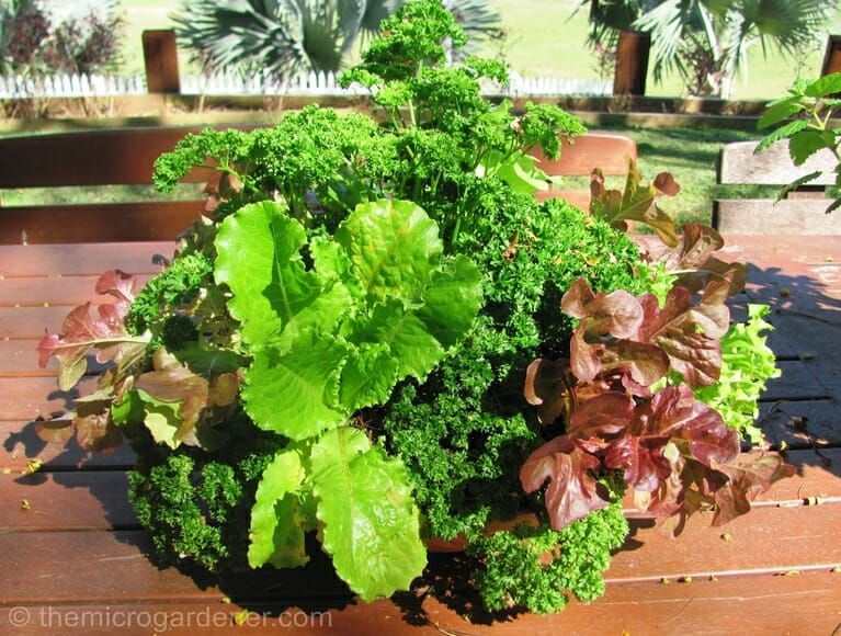 Salad Bowl Garden | The Micro Gardener