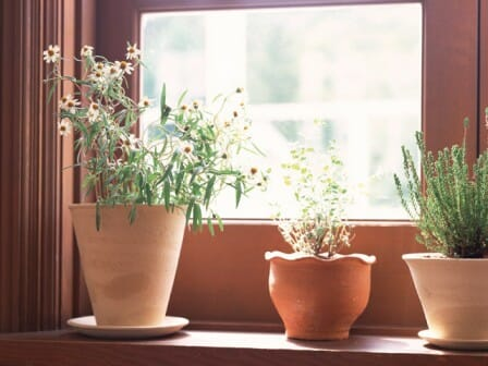Rotate pots regularly so plants can photosynthesize and grow well.